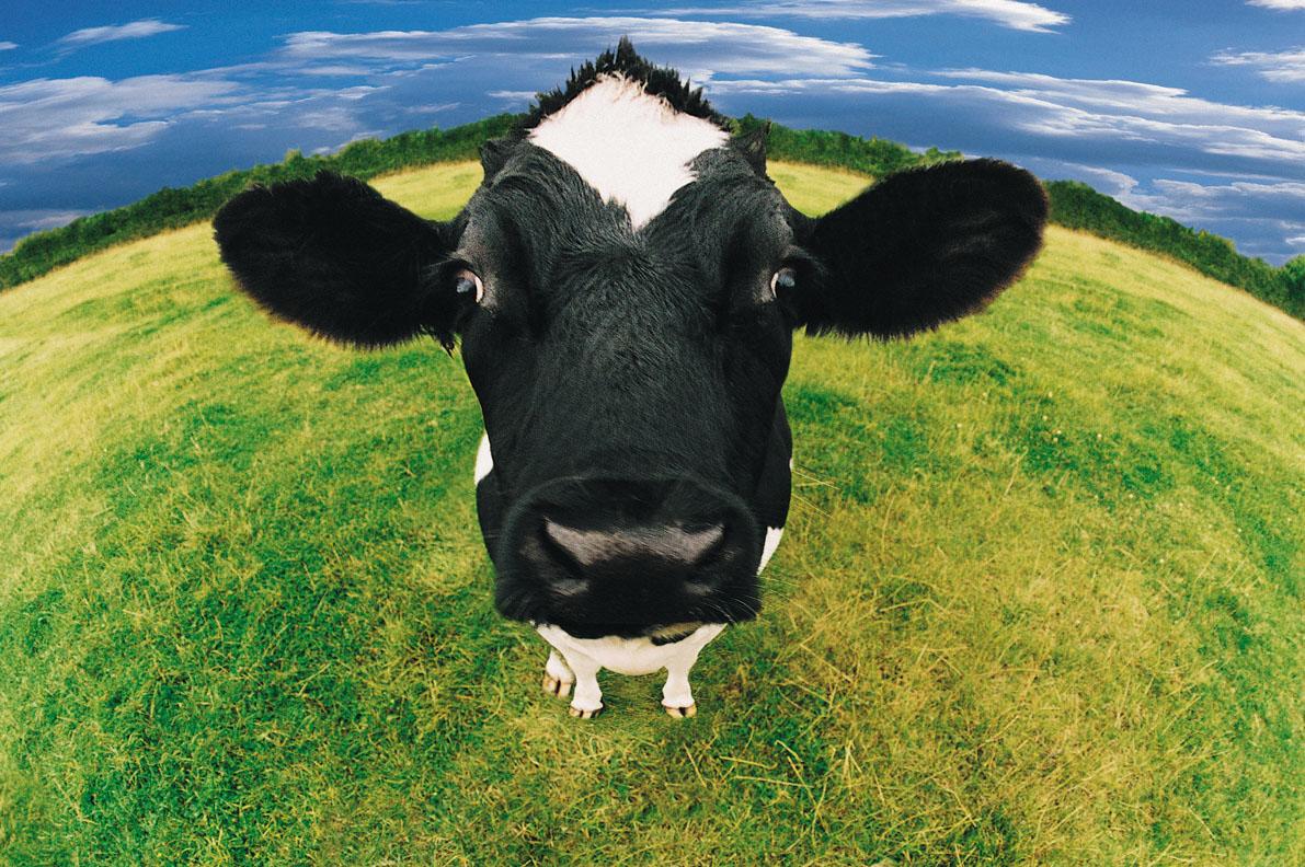Korekcja Racic w Polsce, Cena korekcji racic, poskrom dla bydła